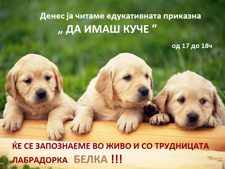 164228720-dog-wallpapers